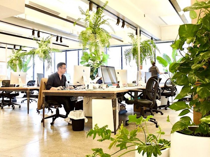 Go Green & Fresh in your Office Space